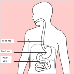 Stomach_diagram_feedme